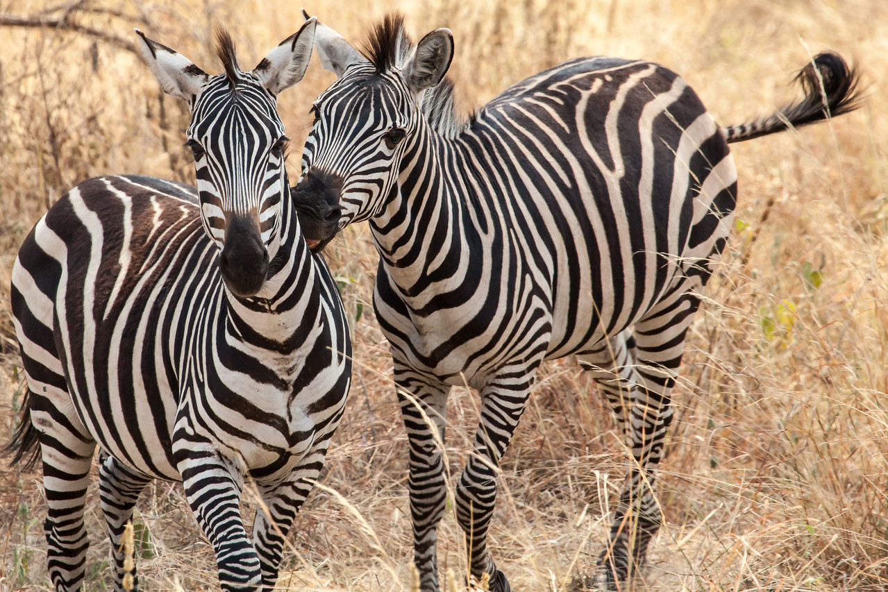 A friendly two-some in Tanzania.