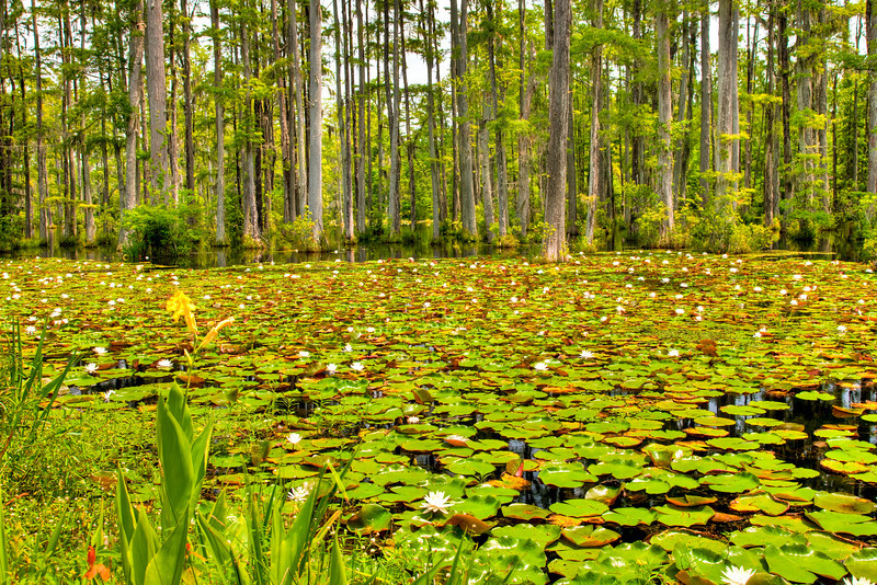 Cypress Gardens, South Carolina