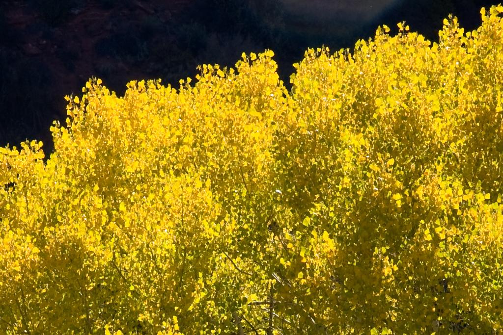 Near Zion National Park, Utah