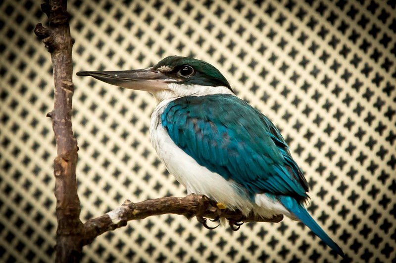 Looks like a kingfisher of some type but can't find it in the book either.