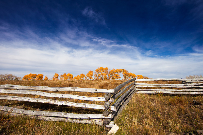 Split-rail fence and golden Aspens in the background