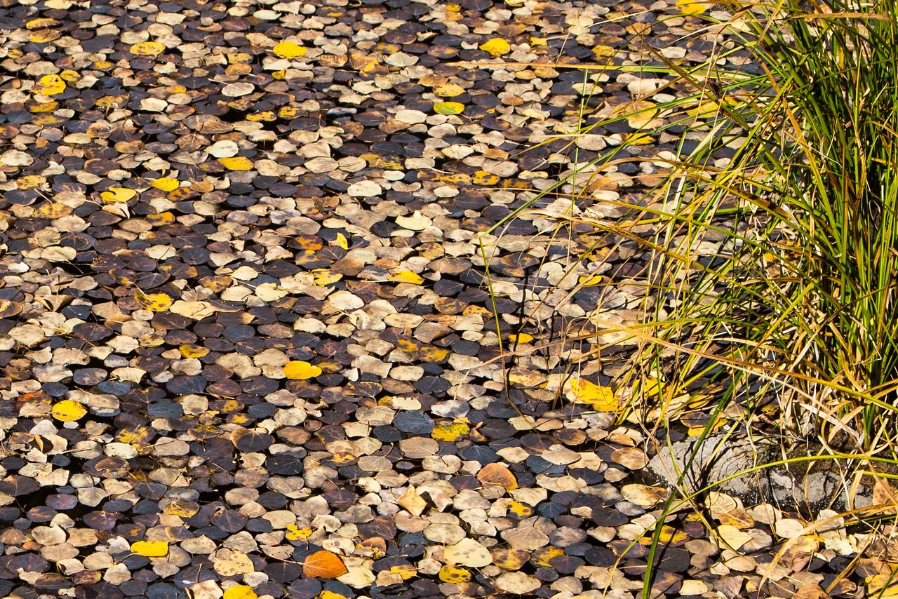 Leaves floating on a pond