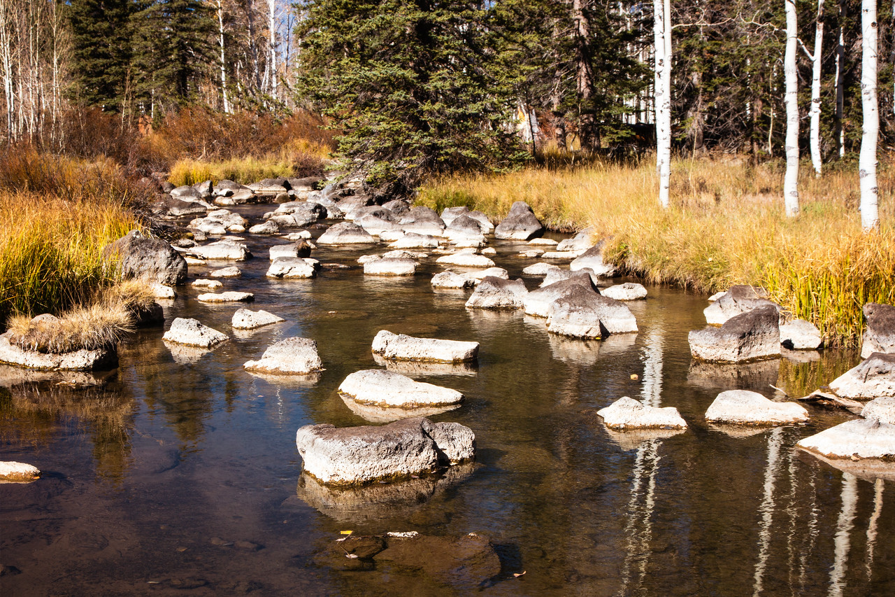 Nature's stepping stones