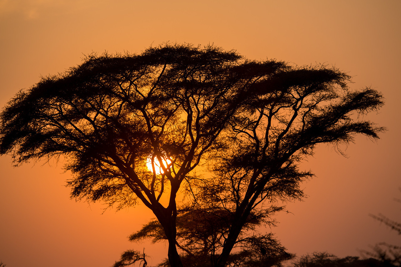 And another setting sun behind the popular Acacia tree.