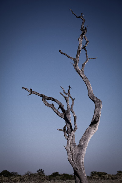 The game reserves had many dead trees, which often were photogenic against the background sky.