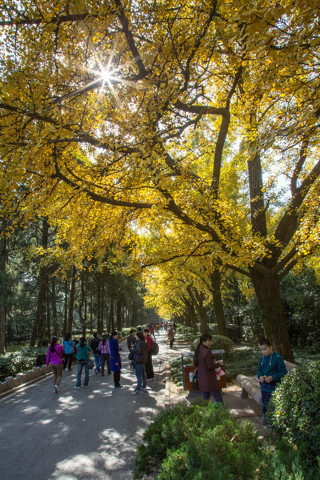 Walking through the Zhongshan Mountain scenic area which includes the Mausoleum.