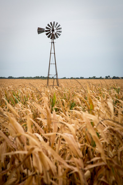 A lonely windmill so common to the farmlands of Kansas
