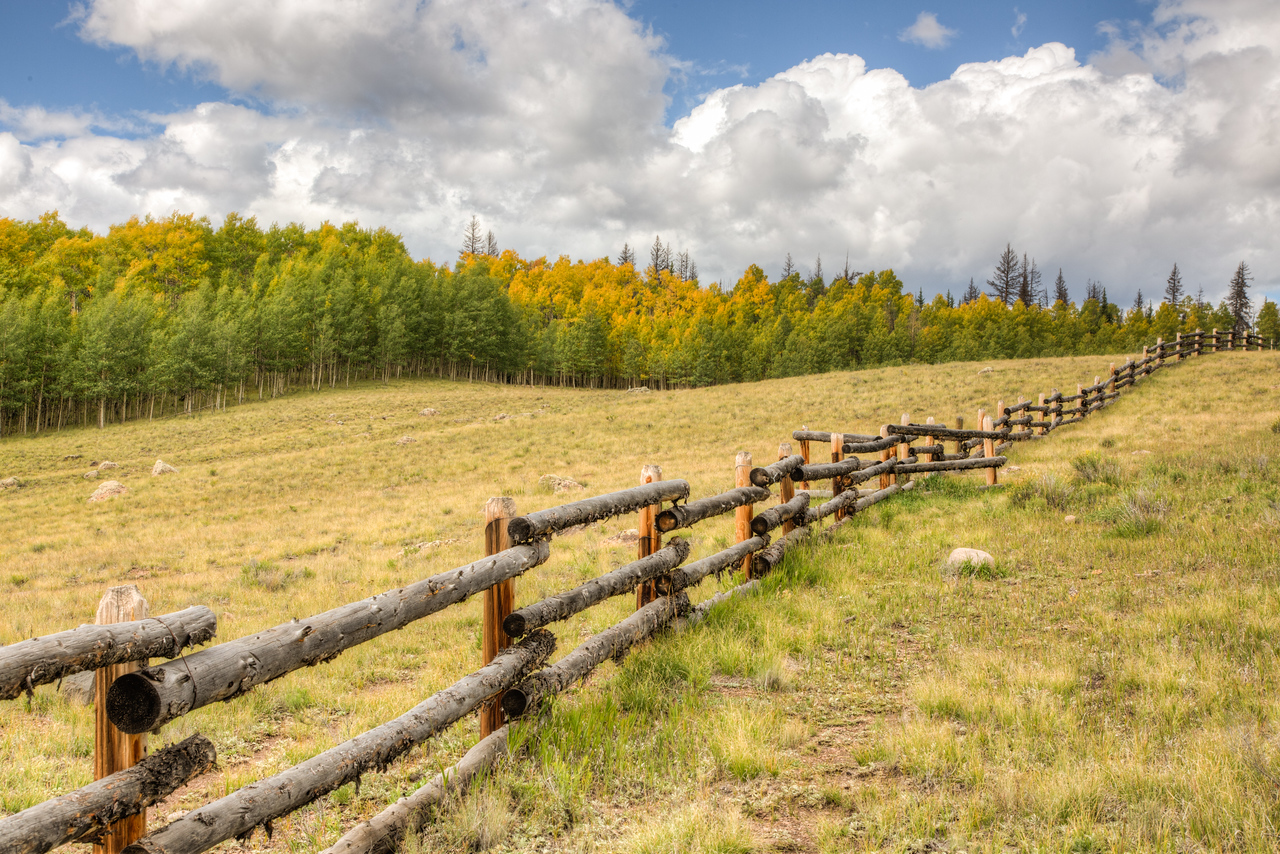 Love these fences made of natural materials