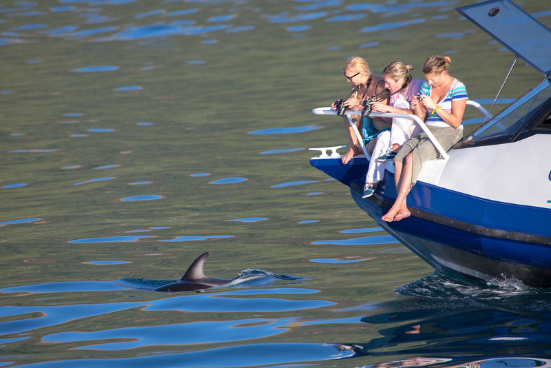 Observing the dolphins