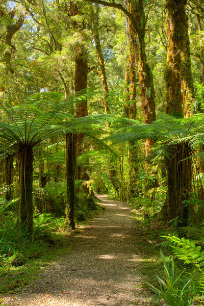 A beautiful trail in the Kahurangi rainforest.