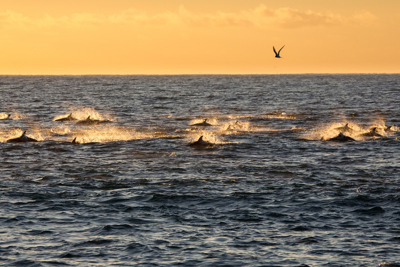 The next morning at dawn we went looking for dolphins and we found them in great numbers.