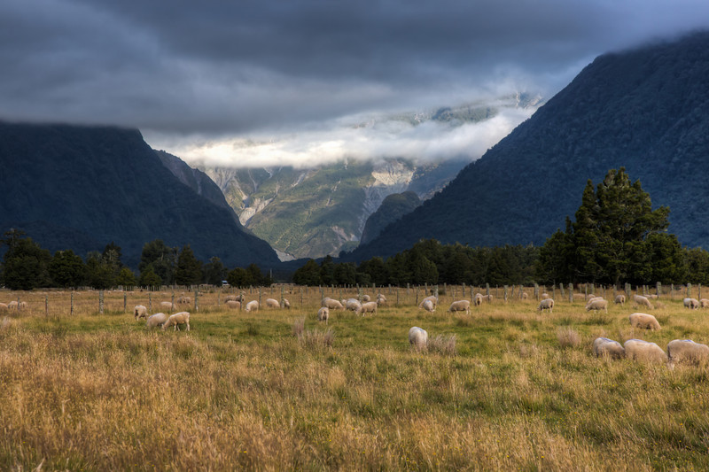 Looking toward Fox Glacier from a nearby sheep station.