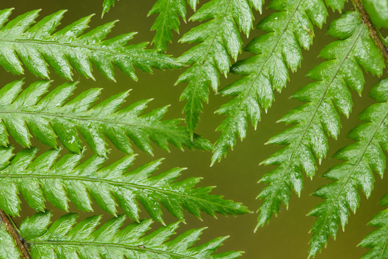 The fern is the national symbol of New Zealand and serves to transition to our next day in the Southern Alps.