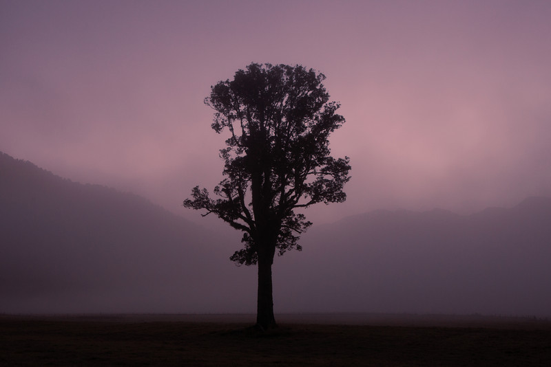 Before dawn we began hiking to Lake Matheson when I saw this lonely tree in the fog.