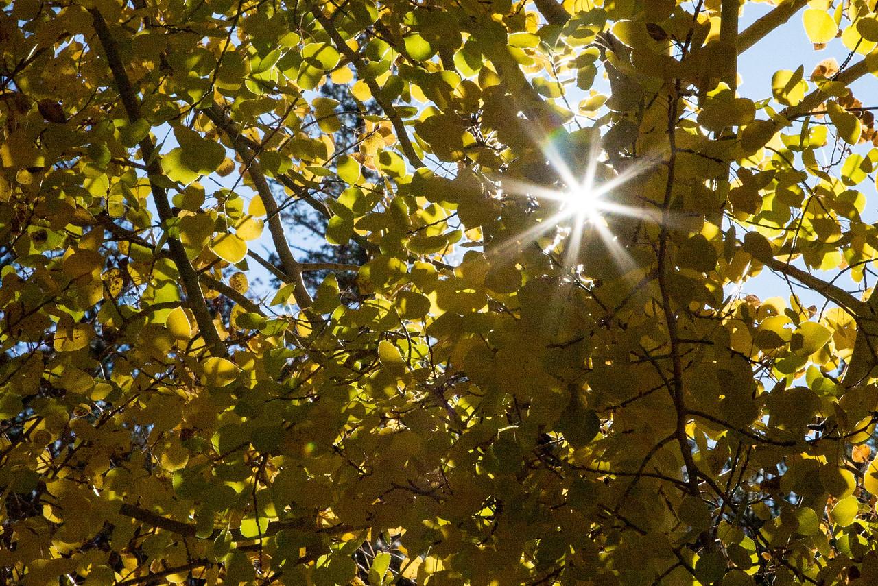 The bursting sun through the Aspens.