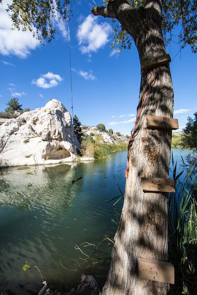 A tree swing