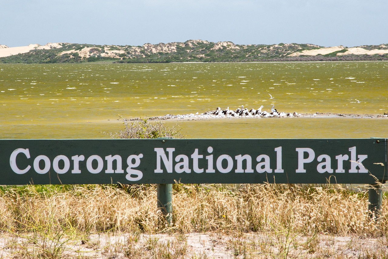 New Year's Day 2014 we traveled to the Coorong National Park which is Southeast of Adelaide. The Coorong is a lagoon ecosystem that is a buffer zone between the mainland and southern ocean.