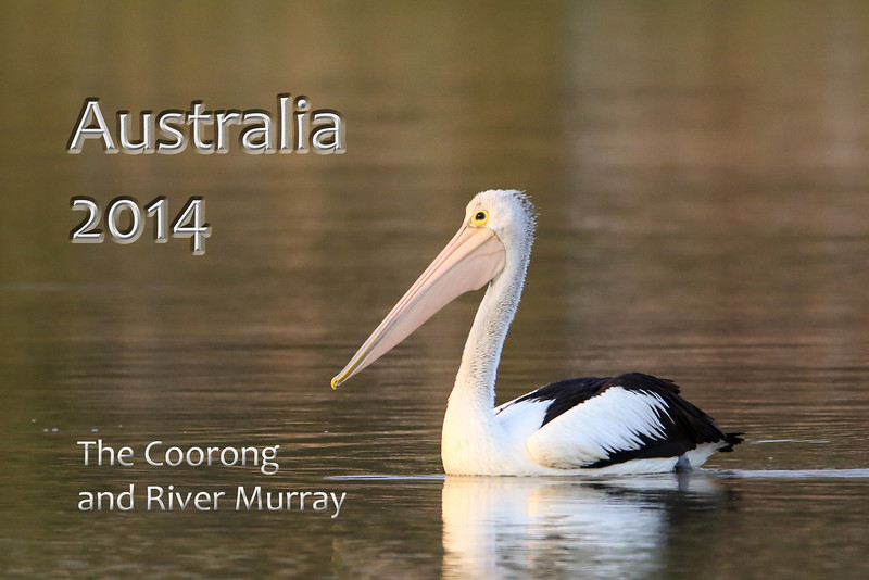 Birds and landscapes from the Coorong and River Murray in South Australia