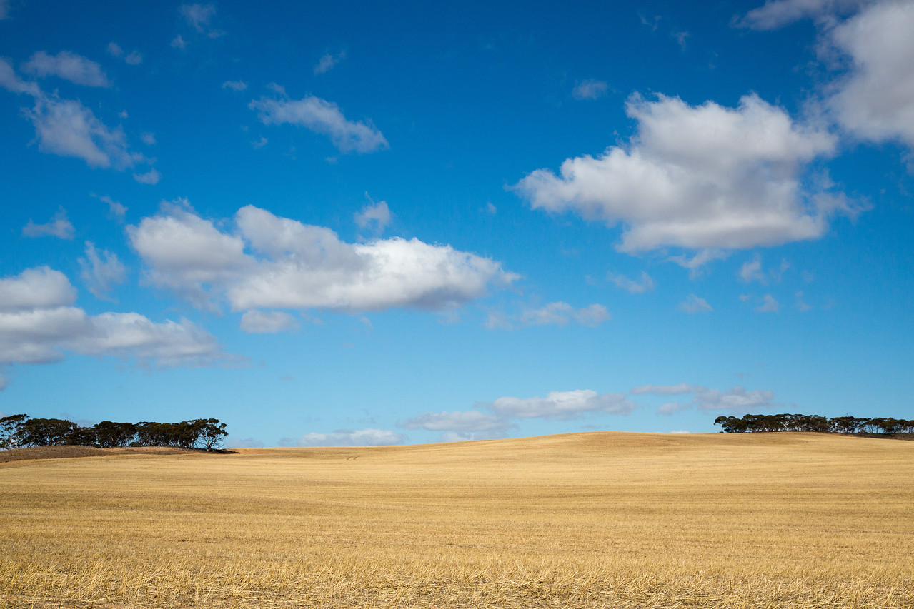 Harvested field on the bluffs above the River Murray