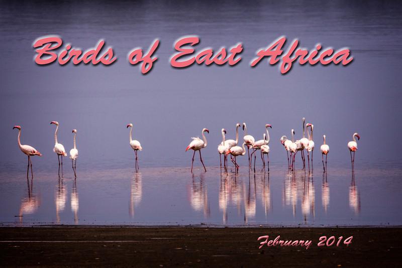 Flamingoes at Ngorongoro, Tanzania