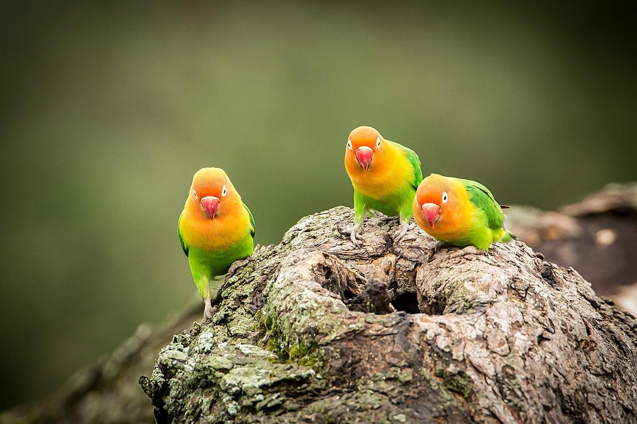More Lillian lovebirds