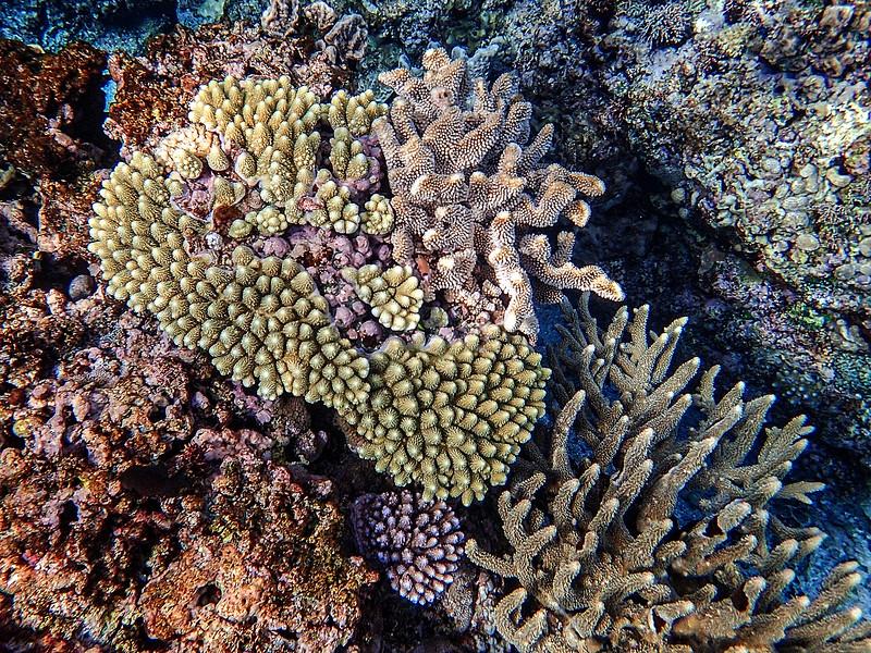 Coral in Fiji