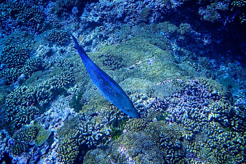 Millenium Atoll, Caroline Islands