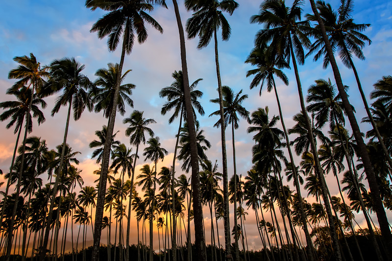 Palms of Kapaa