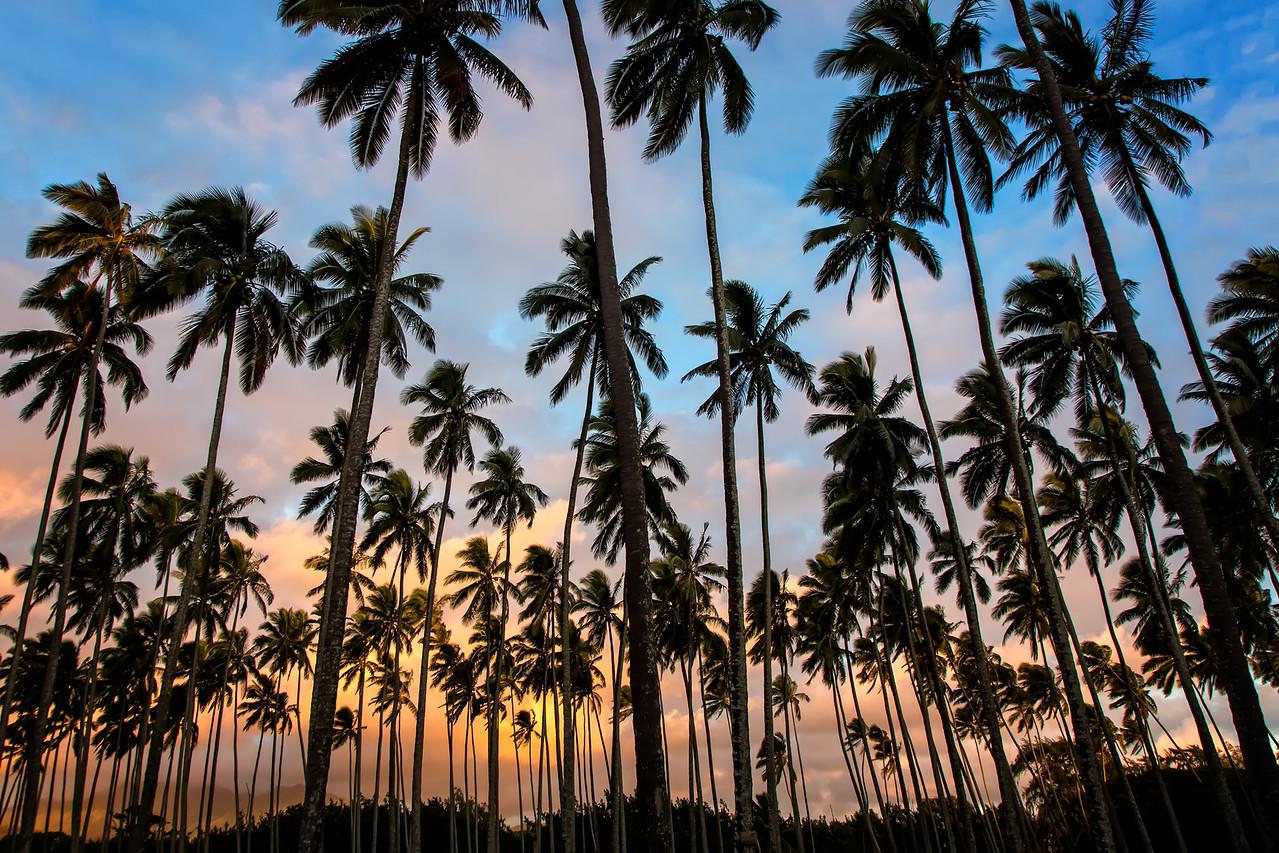 Palms of Kapaa