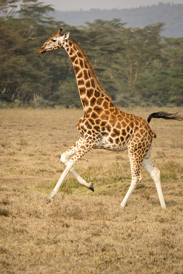 These magnificent animals are grace in motion.