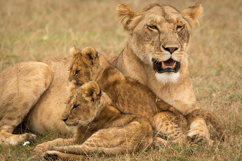 The security of momma.