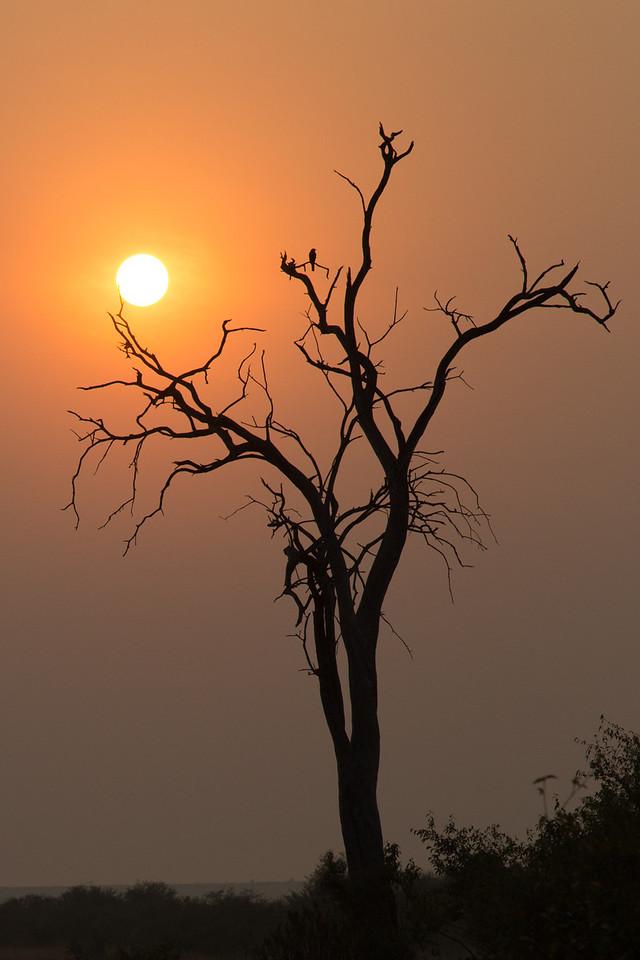 Sunrise in Masai Mara