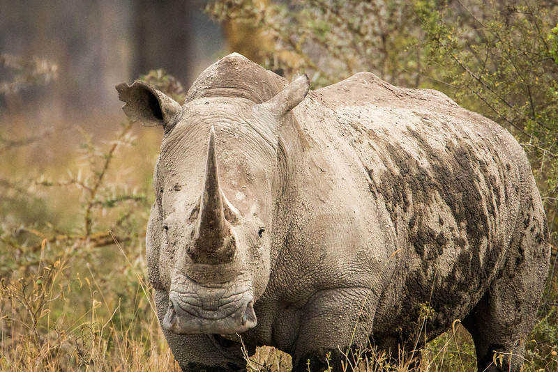 Aren't Rhinos magnificent!