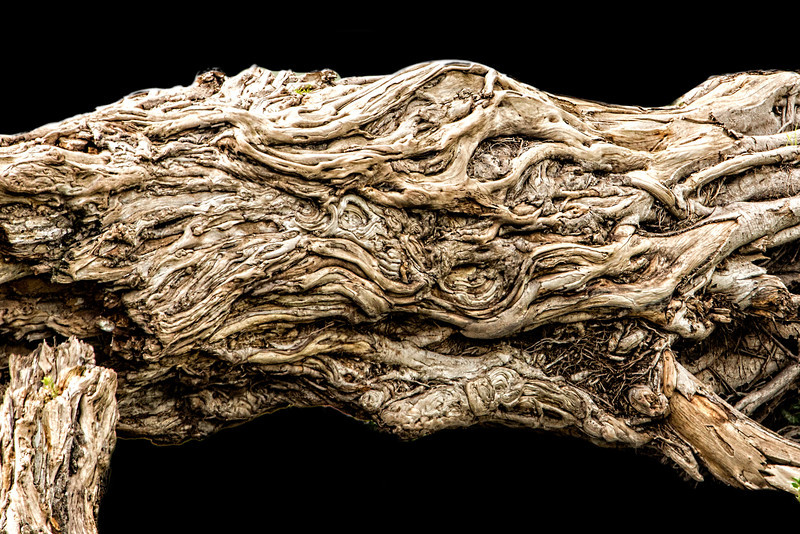 A fallen tree revealing its intricacies.