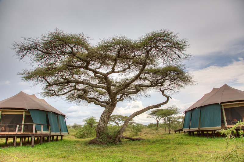 Our tents and a beautiful acacia tree at Lake Masek Luxury Tented camp.