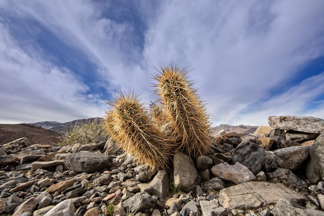 Cactus along Racetrack Road