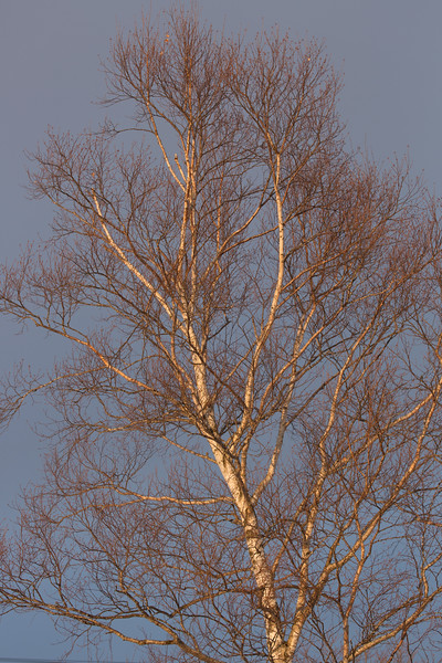 The setting sun highlighted this tree against a darkened sky