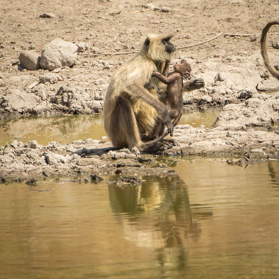 Infant getting a drink from her mother.