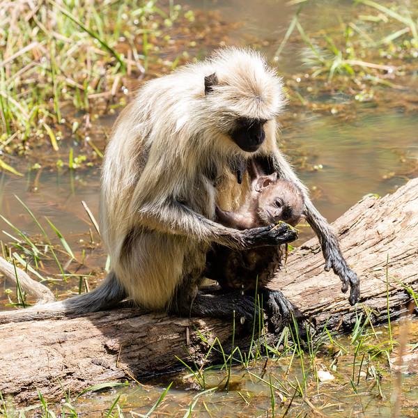 Feeding her infant.