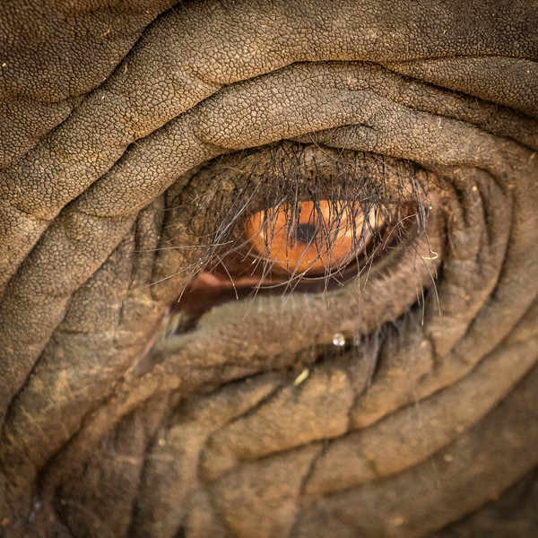 Another elephant eye.