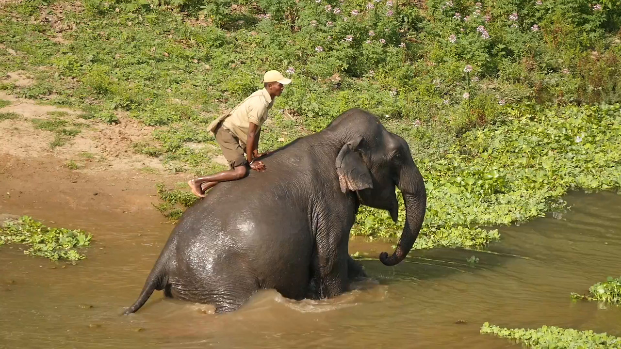 Elephant Bath Time