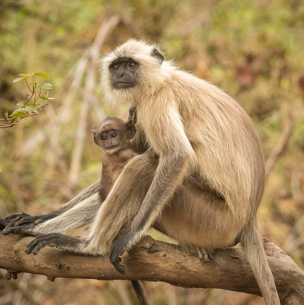 It seemed like every adult monkey had a young one in tow.