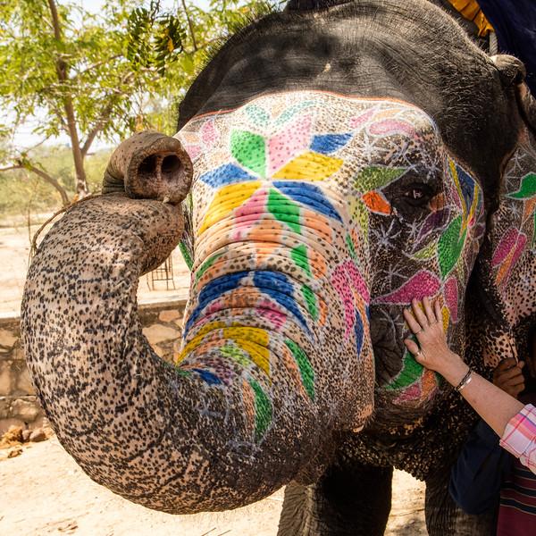 An elephant with a decorative tattoo.
