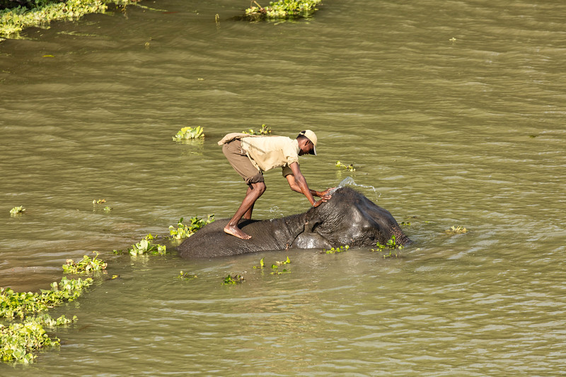 Washing his elephant in the rivere.