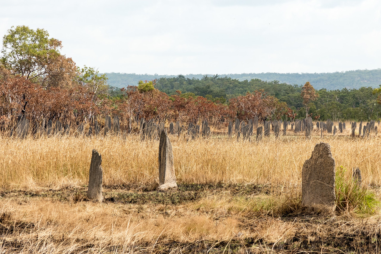 A series of termite mounds that look like gravestones.