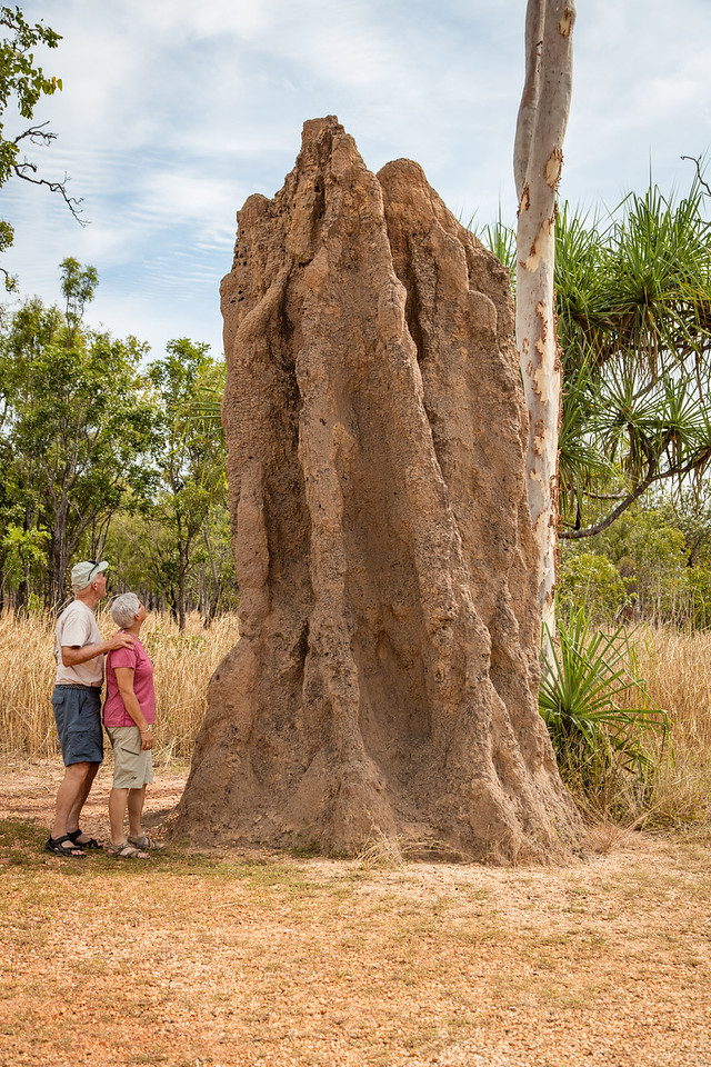 This is an active termite mound which looks to be about 15 feet tall.