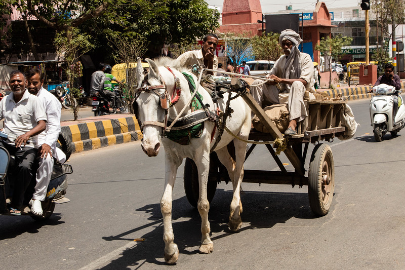 We were constantly fascinated with the diversity of transportation.