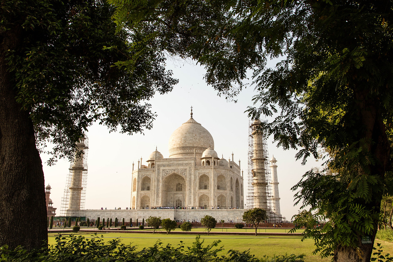 Framing the Taj Mahal from behind a group of trees.