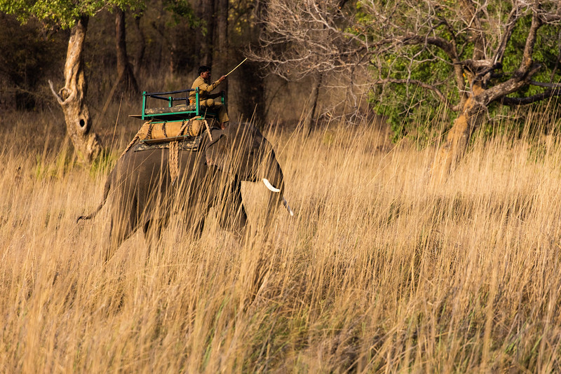 This is a ranger using an elephant to get back into the remote areas of the park.