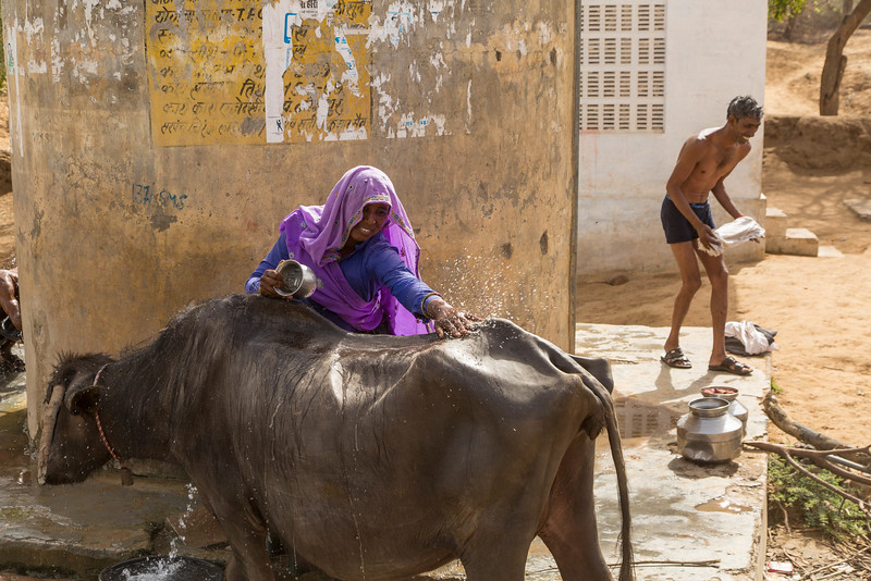 Washing her cow at the well with a fellow in the background washing himself.
